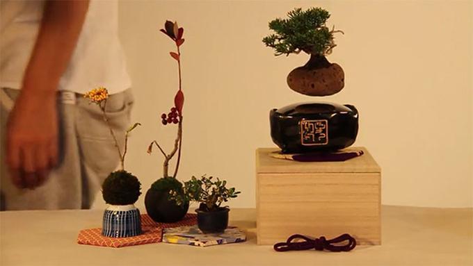 Air Bonsai (2)