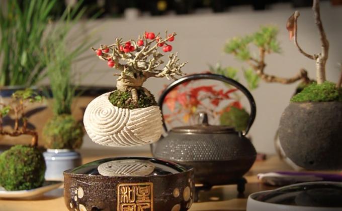 Air Bonsai (3)