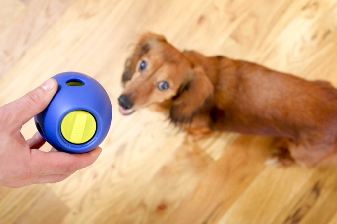 Tikr Treat Activity Toy for Dogs (2)