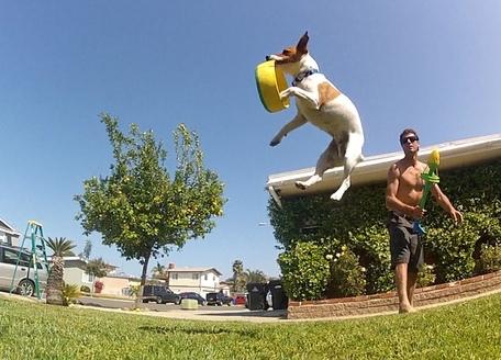 hurrik9 120feet ring launcher for dogs (3)