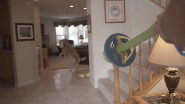 hurrik9 120feet ring launcher for dogs (4)