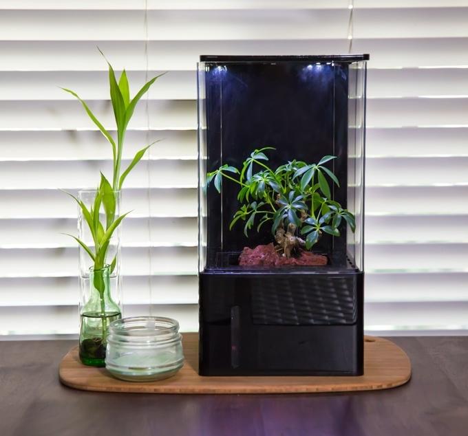 ecocube hydroponics desktop greenhouse (2)