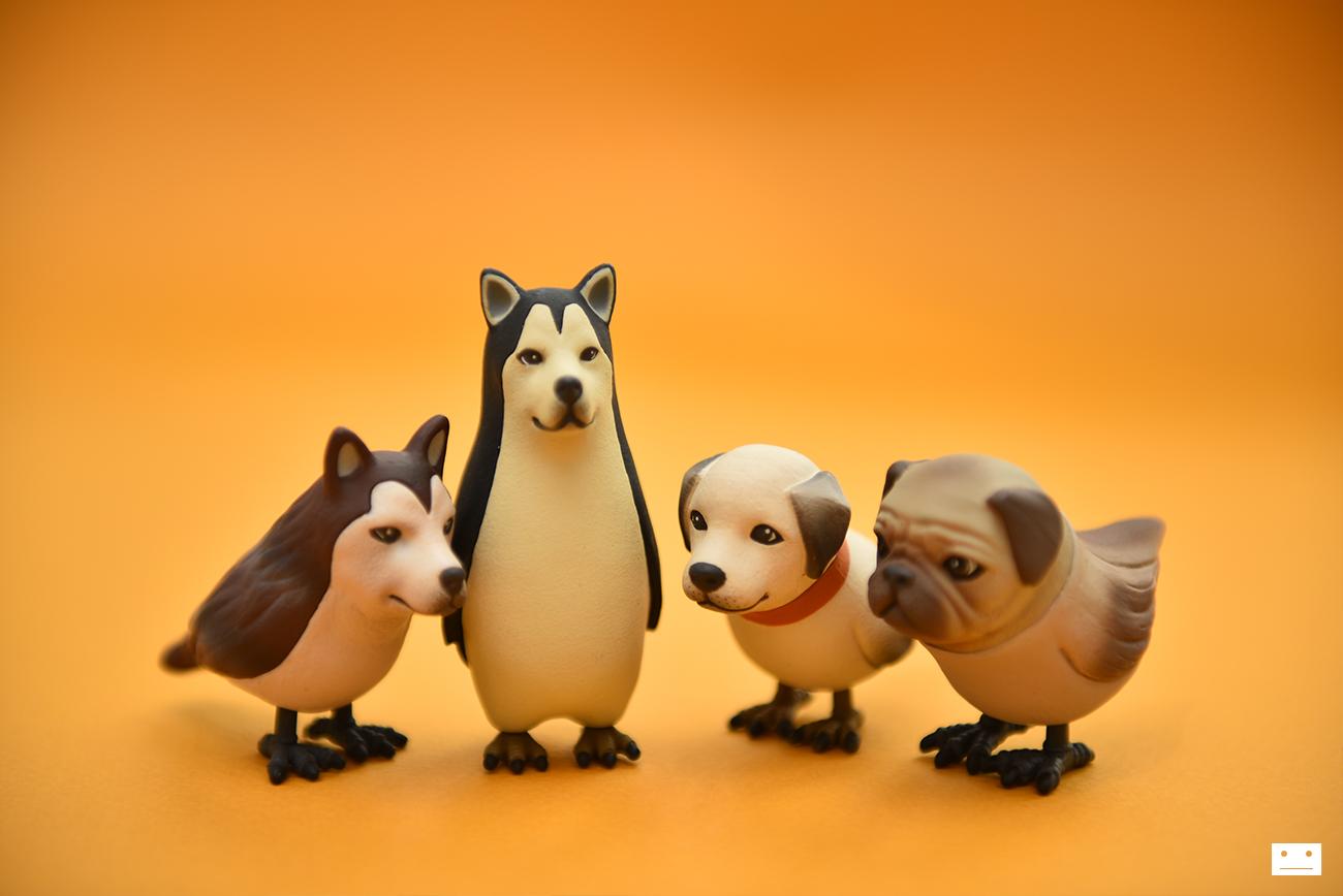 dogbird_5