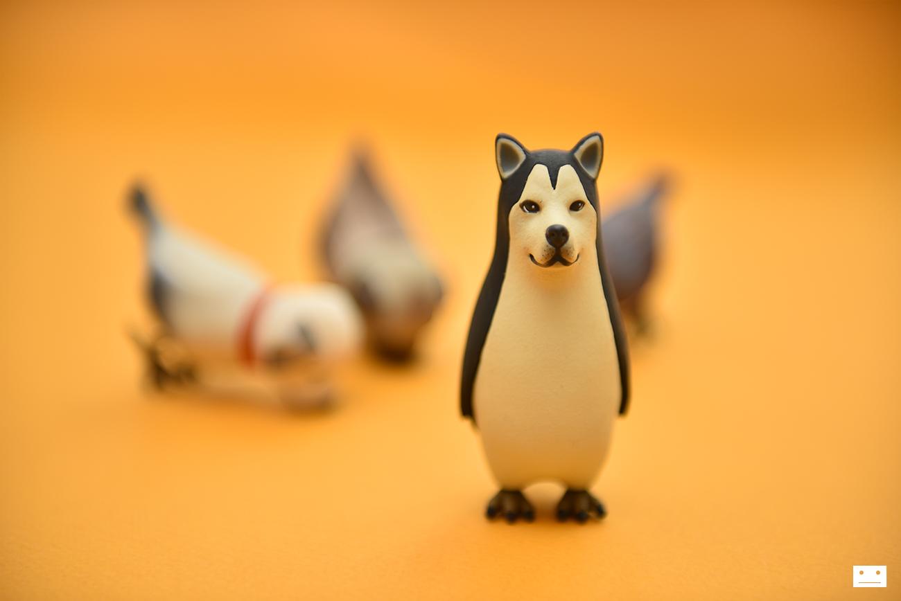 dogbird_7