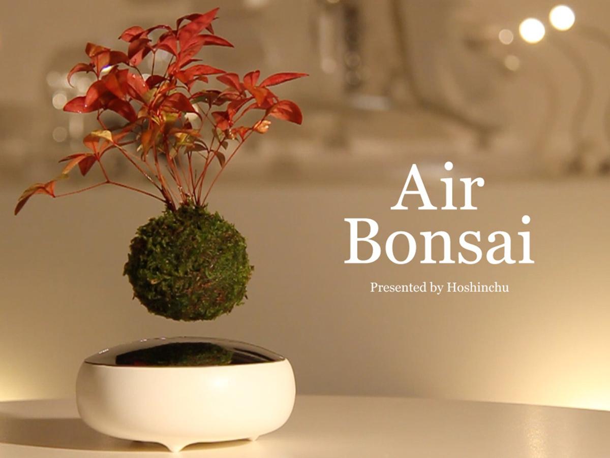 airbonsai-1